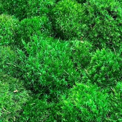 зеленый мох купить украина4