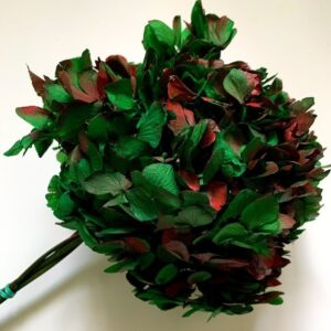 гортензия красно-зеленая10