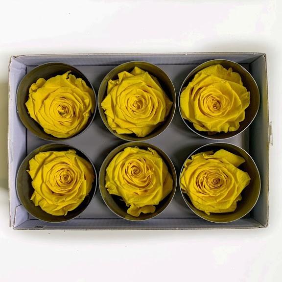 роза желтая123