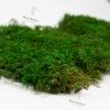плоский мох цена1